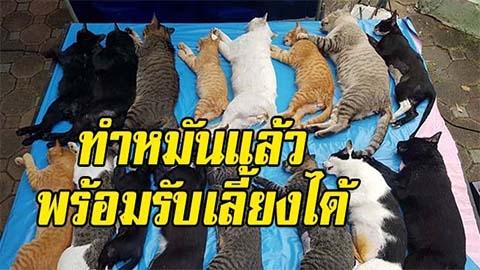 แมวสวนลุมหาบ้าน! หลังโดนจัดระเบียบ ทำหมัน