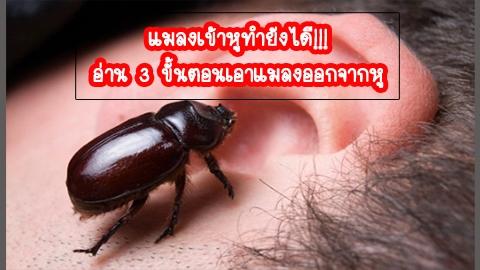 แมลงเข้าหู ทำยังไดี!!! อ่าน 3 ขั้นตอนเอาแมลงออกจากหู