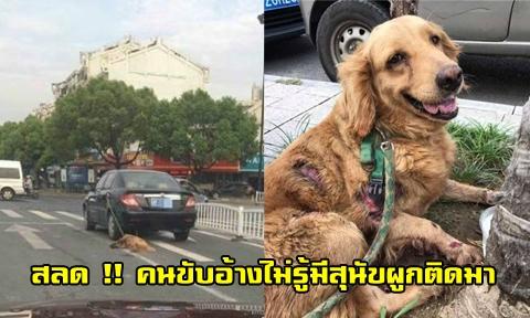 หนุ่มขับรถลากสุนัขพันธุ์โกดเด้นไปตามถนน เจ้าของอ้างลืมว่าผูกสุนัขไว้ที่รถ !!