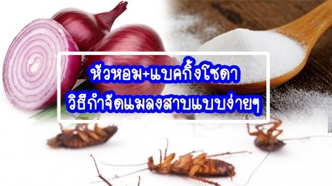 หัวหอม+แบคกิ้งโซดา วิธีกำจัดแมลงสาบแบบง่ายๆ