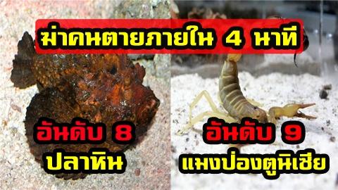 10 สัตว์อันตราย มีพิษรุนแรง ที่สามารถฆ่าคุณให้ตายได้!!