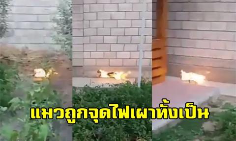 สะเทือนใจคนรักสัตว์ !! แมวถูกจุดไฟเผาทั้งเป็น พยายามวิ่งหนีเอาชีวิตรอด ซ้ำคนเผาหัวเราะร่า