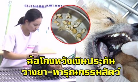 แจ้งจับ นศ.แพทย์ศิริราช หลังทารุณกรรมสัตว์-วางยาสุนัขขณะขนส่งหวังเงินประกัน 40,000 !!!