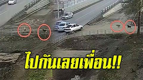 ไปกันเลยเพื่อน!! น้องหมามุง อุบัติเหตุรถชนทีไรเป็นอันต้องวิ่งหน้าตื่นมาดูทุกรอบ