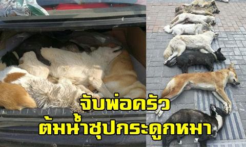 ไล่จับพ่อครัวทำ เมนูเปิบพิสดาร-น้ำต้มซุปหัวกระดูกหมา หลังล่าฆ่าสุนัขเพื่อนบ้านหลายตัว !!! (คลิป)