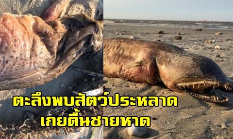สาวโพสต์ภาพเจอ ''สัตว์ทะเลตัวใหญ่-หน้าตาประหลาด'' ขณะเดินที่ชายหาด ทั้งถามนักวิชาการนี้คือตัวอะไร !!!