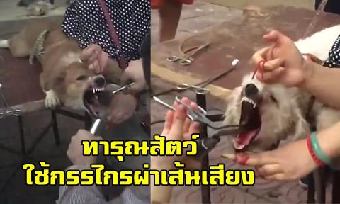 รัฐบาลสั่งปิดคลีนิคเถื่อน หลังแอบอ้างเป็นสัตวแพทย์ ผ่าตัดเส้นเสียงสุนัขไม่ได้มาตรฐาน !!! (