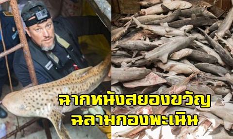 ตำรวจน้ำทางทะเลบุกสกัดเรือจีน 15 ลำ หลังลักลอบล่า ''ฉลามหายาก'' ในน่านน้ำติมอร์ตะวันออก !!!