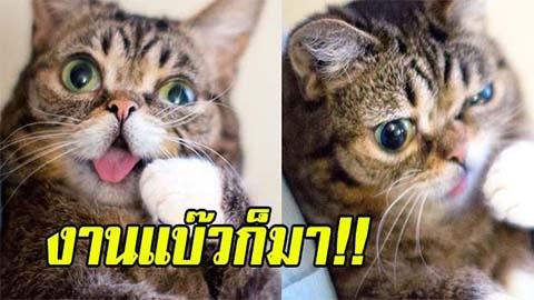 งานแบ๊วก็มา!! พาชม แมวสุดน่ารัก