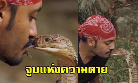 คลิปสุดหวาดเสียว หนุ่มใจกล้าโชว์ ''จูบงูจงอางยักษ์'' ลุ้นทุกวินาที !!! (คลิป)