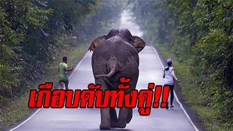 2 นักวิ่งเล่นไม่เรื่อง หยุดเซลฟี่ช้างป่าเขาใหญ่ โดนวิ่งไล่ เกือบดับทั้งคู่