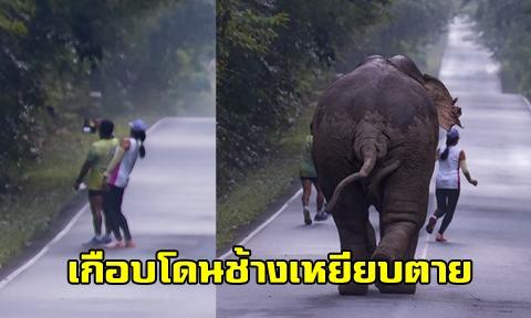 เตือนอย่าทำอีกถ้ายังรักชีวิต !! สองนักวิ่งเห็นช้างข้างทาง แวะเซลฟี่ก่อนช้างวิ่งโล่ โชคดีมีช่างภาพตะโกนช่วย !!!