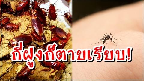 สเปรย์กำจัดยุงและแมลงสาบ สูตรบ้านๆ แต่ตายเรียบ!