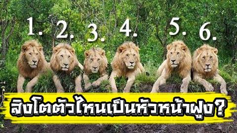 สิงโตตัวไหนคือหัวหน้าฝูง! เปิดคำทำนายความสำเร็จของชีวิตคุณ