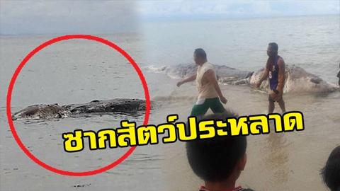 ลากกลับทะเลด่วน!! ซากสัตว์ประหลาด เกยหาด ยาวเกือบ10เมตร