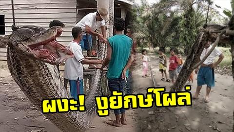 หนุ่มอินโดเจอ ''งูยักษ์'' ยาว7เมตร สู้สุดชีวิตจนแขนเกือบขาด!!