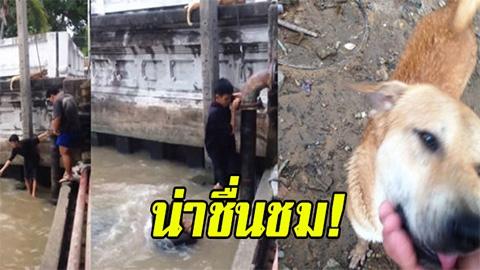 น่าชื่นชม!! หนุ่มๆยอมตัวเปียกทั้งตัวลงไปในน้ำ เพื่อช่วยเจ้าตูบให้รอดตาย คนเข้าชมกว่า 2 ล้านครั้ง