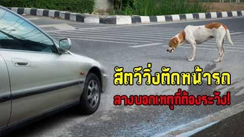 สัตว์วิ่งตัดหน้ารถ ลางบอกเหตุที่ต้องระวัง!
