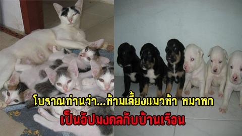 โบราณท่านว่า...ห้ามเลี้ยงแมวห้า หมาหก เป็นอัปมงคลกับบ้านเรือน