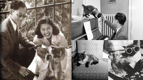 ทำความรู้จัก ''คุณติโต''แมวทรงเลี้ยงของในหลวง ร.9 อีกหนึ่งความสุขเล็กๆของพ่อ