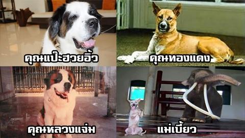 เรื่องเล่า 4 สุนัขทรงเลี้ยงของในหลวง ร.9 ที่ยังอยู่ในความทรงจำของคนไทย