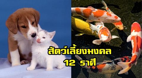 เสริมดวงชะตา !!! ด้วยสัตว์เลี้ยงมงคล 12 ราศี ช่วยหนุนนำโชคลาภ ทำให้ชีวิตเจริญรุ่งเรือง !!!