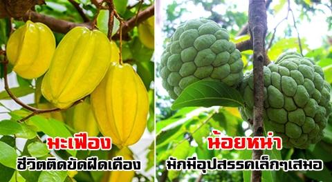 15 ผลไม้ที่ไม่ควรนำไปถวายพระหรือสิ่งศักดิ์สิทธิ์ เชื่อไม่เป็นสิริมงคล ขัดโชคลาภ !!!