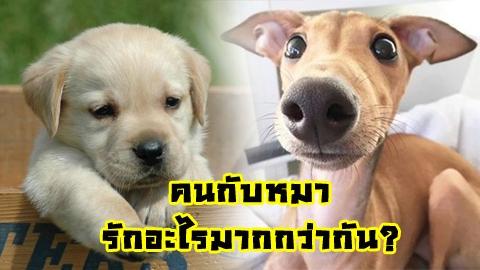 งานวิจัยเผย มนุษย์รักหมามากว่ารักมนุษย์ด้วยกันเอง!!