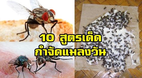 10 วิธีกำจัด
