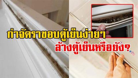 ล้างตู้เย็นหรือยัง? วิธีกำจัดเชื้อราในตู้เย็นง่ายๆ ภายในไม่กี่นาที