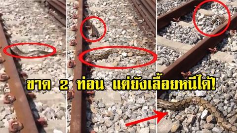 เหลือเชื่อ! งูเหลือมโดนรถไฟทับขาด 2 ท่อน แต่กลับรอด เลื้อยหนีเข้าป่าได้(คลิป)