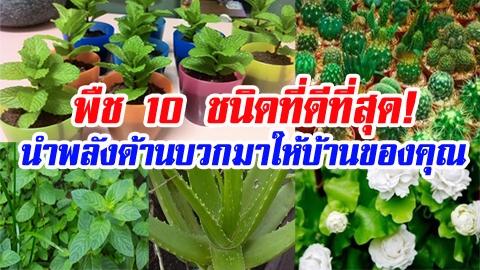 พืช 10 ชนิด ที่ดีที่สุด ช่วยนำพลังงานด้านบวกมาให้บ้านของคุณ