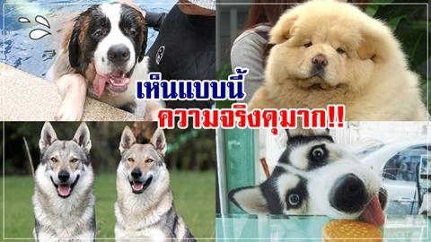 อย่าไว้ใจ!! 10 อันดับหมาโหดที่สุดในโลก หน้าตาแบบนี้แหละ!!