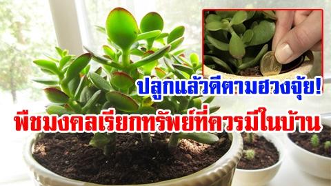 ปลูกแล้วดีตามฮวงจุ้ย! พืชมงคลที่ควรมีในบ้าน เสริมโชค ดูดเงินดูดทอง