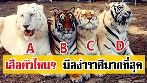เสือตัวไหน? มีสง่าราศีมากที่สุด บ่งบอกว่า คุณจะมีโชคลาภมากแค่ไหน?