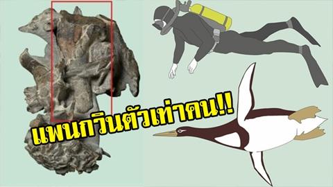 ไม่น่าเชื่อ!! เพนกวินตัวเท่าคน! นักวิทย์เผยแท้จริงแล้วเพนกวินเคยตัวเท่าคนมาก่อนในยุคประวัติศาสตร์!!