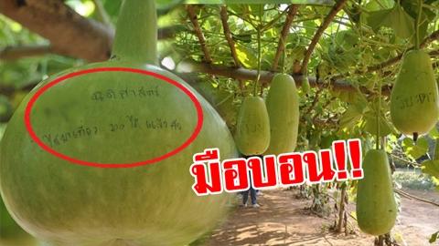 มือบอน!! เขียน ''สลักชื่อ'' บนฟัก ในอุโมงค์ฟักแฟงสวนเกษตร 100 ไร่!!