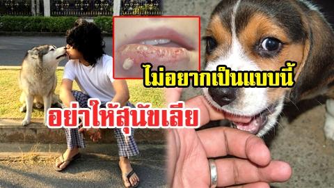 อย่าชะล่าใจ! อันตรายที่จะเกิดขึ้นกับคุณ หากให้สุนัขเลียหน้า