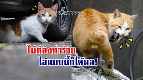 6 วิธีไล่แมวป่วนบ้าน!! วิธีธรรมชาติ ไม่บาปกรรม!!