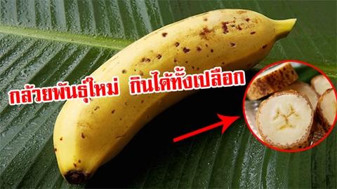 สวนผลไม้ญี่ปุ่นสุดเจ๋ง!!! พัฒนากล้วยพันธุ์พิเศษ กินได้ทั้งเปลือก ไม่ต้องปอก !