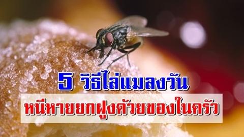 5 วิธีไล่แมลงวัน หนีหายยกฝูงด้วยของในครัวง่ายๆ ไม่ต้องฆ่า!!