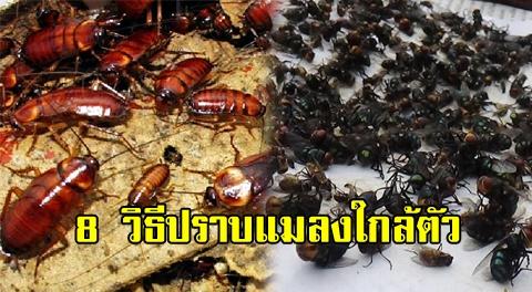 8 วิธีปราบแมลงตัวร้ายง่ายๆ ด้วยของใช้ในครัวเรือน !!!
