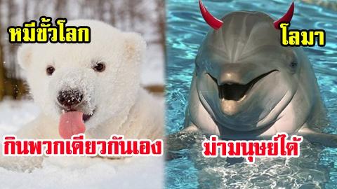 แบ๊วอันตราย! 8 สัตว์โลกสายแบ๊ว ถ้าคิดว่าน่ารัก คุณคิดผิด!!