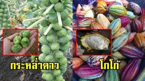 พาทัวร์สวน!! ผักผลไม้ 14 ชนิด ที่หลายคนไม่เคยเห็นต้นจริงๆ มาก่อน!!