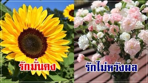 เบื่อกุหลาบ!! 4 ดอกไม้ ความหมายดี มอบให้คนที่รักได้ไม่ซ้ำใคร!!