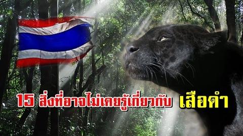 15 สิ่งที่คุณอาจไม่เคยรู้เกี่ยวกับเสือดำ สัตว์ใกล้สูญพันธุ์ในประเทศไทย!!