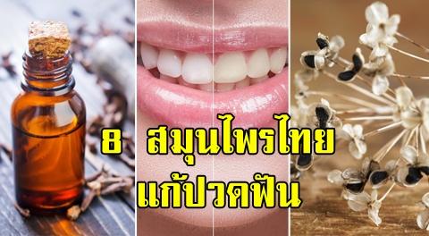 8 สมุนไพรไทย มีสรรพคุณบำรุงรากฟันให้แข็งแรง แก้ปวดฟัน-ป้องกันฟันผุ !!!