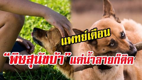 แพทย์เตือน! พิษสุนัขบ้า แค่ถูกน้ำลายก็ติดได้ ไม่มียารักษา!!