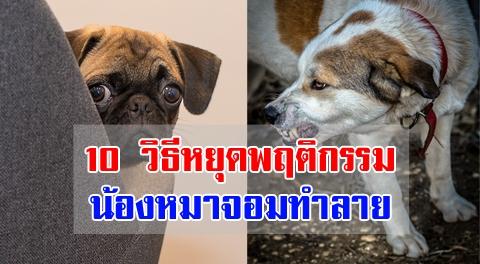 ทำไงดีสุนัขชอบพังบ้านเละ !! 10 ไม้เด็ดปรับพฤติกรรมน้องหมาจอมทำลายให้หมดไป !