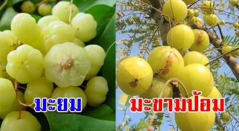 5 ผัก ผลไม้ ช่วยแก้ไอขับเสมหะได้ดี โดยเฉพาะคนป่วยเป็นไข้หวัดหรือภูมิแพ้ !!!
